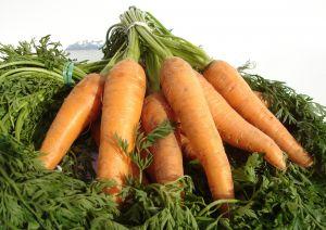 mrkva = zdravlje